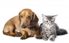 Pet Insurance Claims and Statistics