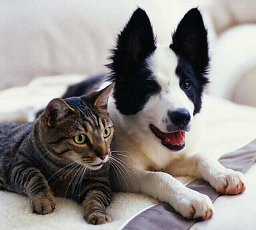 Cat & Dog Insurance Pre Exisiting Condition